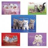 Альбом для рисования, А4, 24 листа, спираль, обложка картон, HATBER, 205х300 мм, 'Милые котята', 24А4Всп, A075449