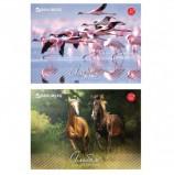 Альбом для рисования, А4, 32 листа, скоба, обложка картон, BRAUBERG, 200х283 мм, 'Живая природа', 103683