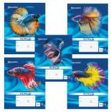 Тетрадь 12 л. BRAUBERG, клетка, обложка картон, MAGIC FISH, 104768