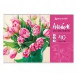 Альбом для рисования А4 40 листов, скоба, обложка картон, BRAUBERG 'ЭКО', 202х285 мм, 'Тюльпаны', 105088