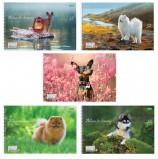 Альбом для рисования А4, 32 листа, спираль, обложка картон, HATBER ECO, 205х300 мм, 'Собаки' (5 видов), 32А4Cсп