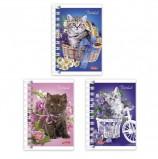 Записная книжка, А7, 67х102 мм, 40 л., гребень, обложка мелованный картон, HATBER, 'Нежные котята', 40ЗК7В1гр, Z217177